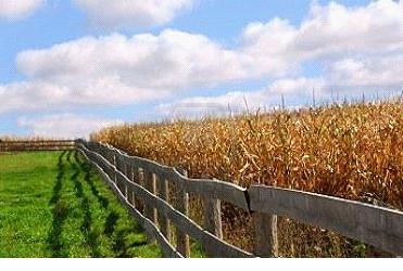 забор «ранчо»