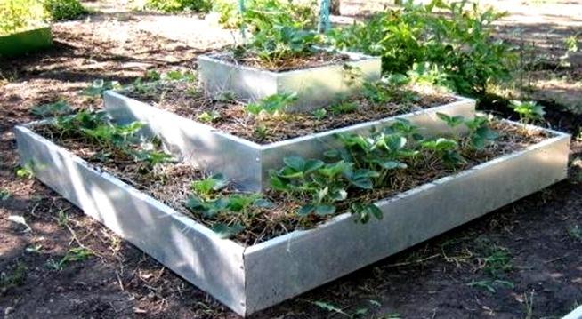 Высадка растений ступеньками
